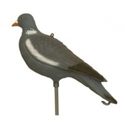 Pigeon wings flying RA SPORT